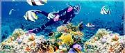 VPQ13. Tour Bắc Đảo Phú Quốc- Câu Cá Lặn Biển Ngắm San Hô