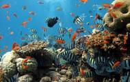 Khám phá các hoạt động thú vị nơi đảo ngọc Phú Quốc