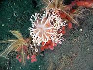 Lặn ngắm san hô trên biển Phú Quốc