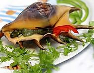Sò, Ốc đặc sản Phú Quốc