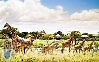 Giới thiệu Vinpearl Safari