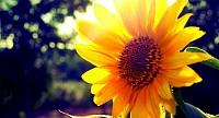Tháng 3 là mùa của những loài hoa nào ?