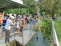 Trang trại chó xoáy Phú Quốc