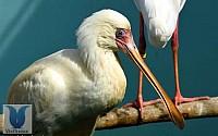Vinpearl Safari vừa đón gần 200 động vật quý hiếm