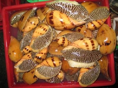 Khám phá những đặc sản từ Sò- Ốc Phú Quốc