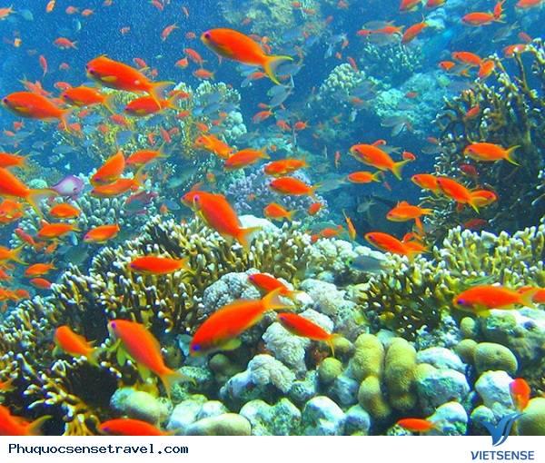 Du lịch Phú Quốc câu cá lặn biển ngắm san hô