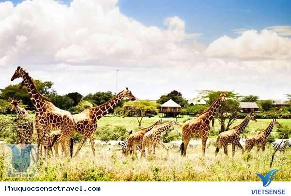 Giới thiệu Vinpearl Safari,gioi thieu vinpearl safari