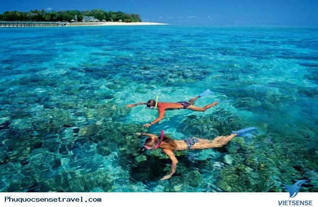Giới thiệu về  lặn nhìn san hô ở Nam Đảo Phú Quốc