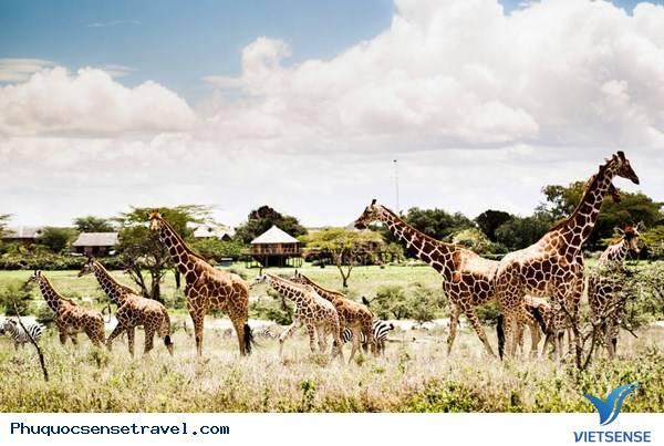 Phú Quốc Khởi Công Dự Án Vườn Thú Vinpearl Safari