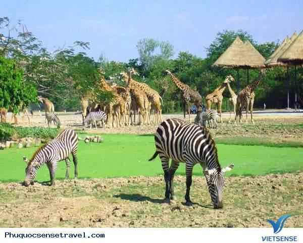 Sự thật Safari Phú Quốc có làm thú chết nhiều ?